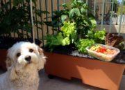 Urban Farming: My Introduction to Earthbox Apartment Gardening